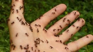 comment-lutter-contre-les-fourmis