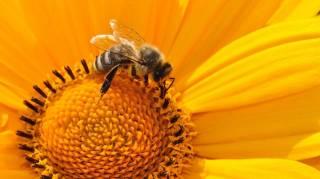 les-gestes-a-faire-pour-aider-les-abeilles