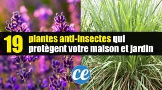 19 Plantes Anti-Insectes Qui Protègent Naturellement Votre Maison Jardin