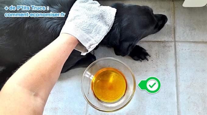 l 39 astuce de mon v to pour liminer les puces du chien avec du vinaigre de cidre. Black Bedroom Furniture Sets. Home Design Ideas