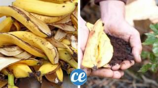comment utiliser les peaux de banane dans le jardin