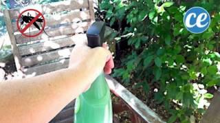 Débarrassez-Vous des Moustiques spray maison