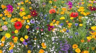 listes des plantes et des fleurs à mettre dans son jardin pour aider les abeilles