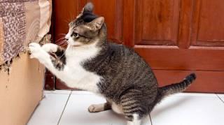 répulsif contre les chats