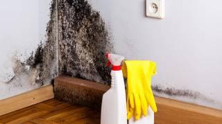 Comment se débarrasser de la moisissure sur les murs