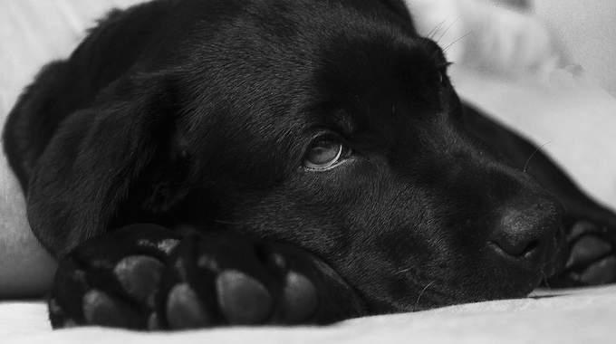 Votre Chien Est Malade ? Voici Le Remède Miracle De Mon Vétérinaire.