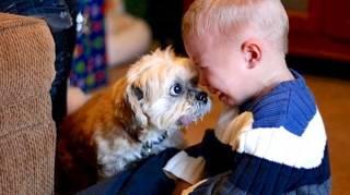 34 Photos Qui Montrent Pourquoi Tous Les Enfants Devraient Grandir Avec Un Animal De Compagnie
