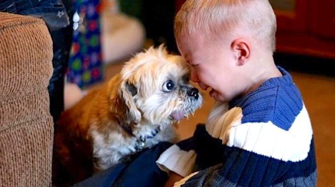 34 Photos Qui Montrent Pourquoi Tous Les Enfants Devraient Grandir Avec Un Chien (Ou Un Chat).
