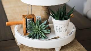 comment faire de belles composition avec des plantes grasses