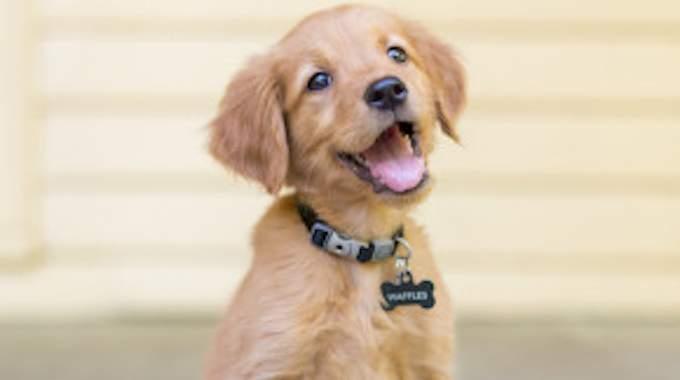 Dog Sitting Entre 10 et 15 € par Jour : Bon Plan ou Trop Cher ?