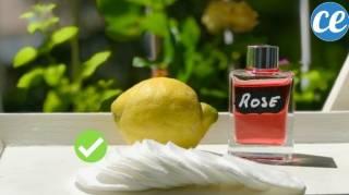 recette du démaquillant purifiant pour les peaux sensibles