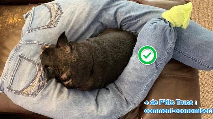 voici comment faire un coussin pour chien avec un vieux. Black Bedroom Furniture Sets. Home Design Ideas