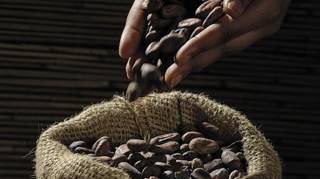 Conservation du Cacao : Notre Astuce pour le Garder Longtemps