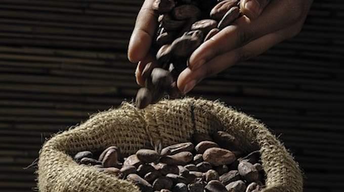 Conservation du Cacao : Notre Astuce pour le Garder Longtemps.