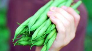 Découvrez les 10 astuces secrètes de maraîcher pour faire pousser des beaux HARICOTS VERTS.