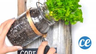 DIY : Comment faire un magnifique jardin d'herbes aromatiques avec des vieux bocaux !