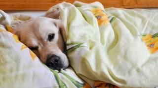 5 Bonnes Raisons De Dormir Avec Son Chien