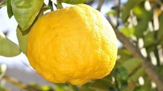 3 Utilisations du Citron dans la Maison pour Faire des Miracles à Bas Prix. (n°2)
