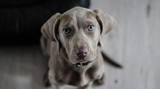 les 10 commandements du chien a connaitre