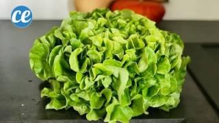 Salade Verte : L'Astuce D'un Cuisto Pour Bien La Laver