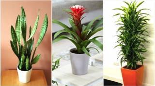 24 Belles Plantes d'Intérieur Qui Poussent MÊME À L'OMBRE