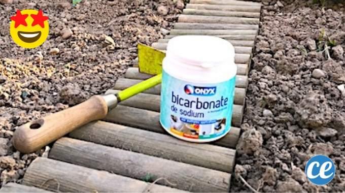 Potager : 3 Utilisations Du Bicarbonate Qui Vont Vous Simplifier la Vie.