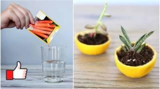 14 Astuces de Génie Pour Vous Simplifier le Jardinage à la Maison