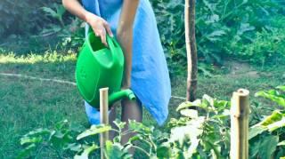Économie Eau : Récupérer l'Eau de Nettoyage des Légumes pour Arroser les Plantes.