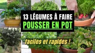 Les 13 Légumes Les Plus Faciles (et Rapides) à Faire POUSSER EN POT
