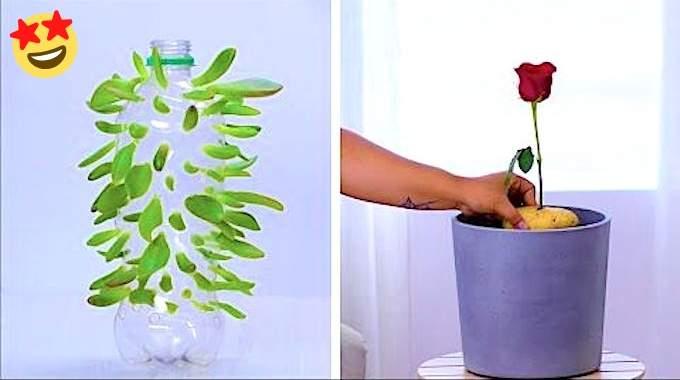 12 Astuces de Génie Pour Vos Plantes d'Intérieur.