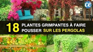 Les 18 Meilleures Plantes Grimpantes à Faire Pousser Sur les Pergolas