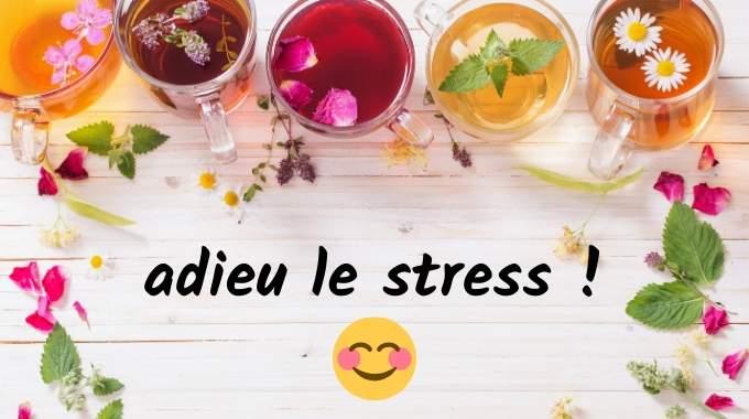 5 Tisanes Miracles Pour Dire Adieu au Stress Et à l'Anxiété.
