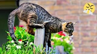 9 Astuces Pour Faire Fuir les CHATS de Votre Jardin DÉFINITIVEMENT
