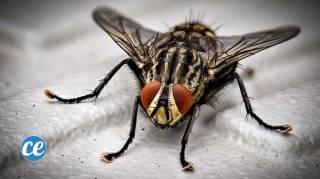 astuces pour se débarrasser mouches