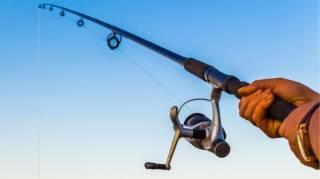 Comment Entretenir Sa Canne à Pêche Avec
