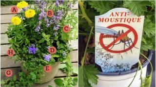Le Pots de Fleurs ANTI-MOUSTIQUES Pour la Terrasse