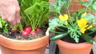 Les 21 Fruits et Légumes Les Plus Faciles à Faire Pousser EN POT