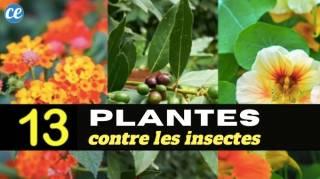 13 Plantes Magiques Qui Repoussent les Insectes Naturellement