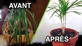 4 Secrets de Jardinier Pour Sauver Une Plante MORTE