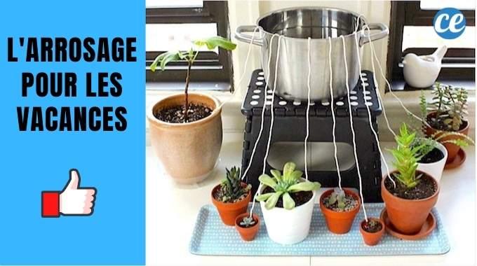 Comment Arroser Ses Plantes Pendant les Vacances ? L'Astuce de Génie !