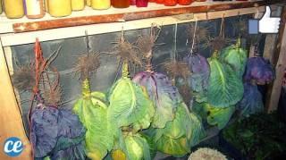 Comment Conserver Ses Fruits & Légumes Pendant des Mois SANS FRIGO