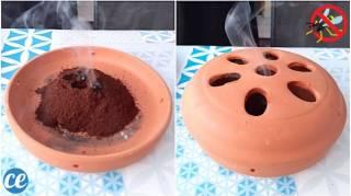 Débarrassez-Vous des GUÊPES En Brûlant du Café Moulu Voici Comment