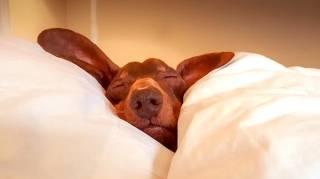 Vous Avez du Mal à Dormir  10 Astuces Magiques Pour Dormir Comme un Bébé