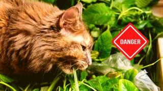 30 Plantes Toxiques Pour Votre Chat à Connaître Absolument