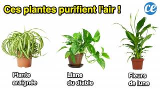 9 Plantes d'Intérieur Qui Nettoient l'Air de Votre Maison SANS Rien Faire