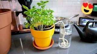 15 Astuces Faciles Pour Arroser Ses Plantes Quand On Est Absent