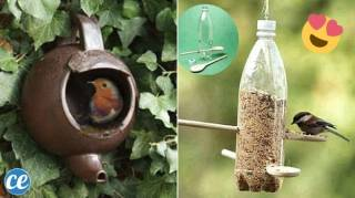 23 Mangeoires Faciles à Faire Pour Nourrir les Oiseaux en Hiver