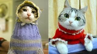 108 Photos de Chats Avec Leurs Petits Pulls Trop Mignons