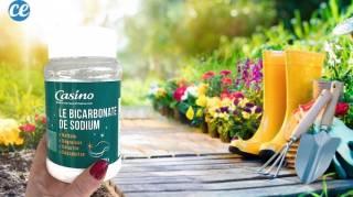 Comment j'Utilise le Bicarbonate Pour un Jardin 100% Naturel