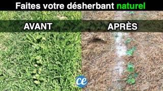 Désherbant Naturel : 8 Astuces SANS Danger Contre les Mauvaises Herbes